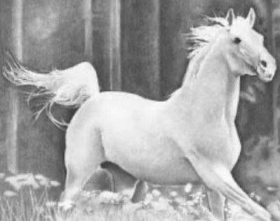 Cavalo Branco - Sandra Lima